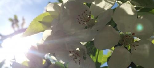 Die Sommerferien 2017 – Yoga im Garten, ein paar Impressionen!